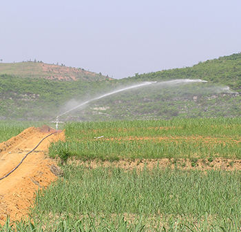 Report on irrigation of sugarcane by hose reel